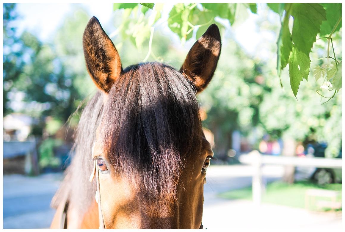 katrin-kind-portrait-fotografie-mit-pferd-muenchen-rosenheim_0016.jpg