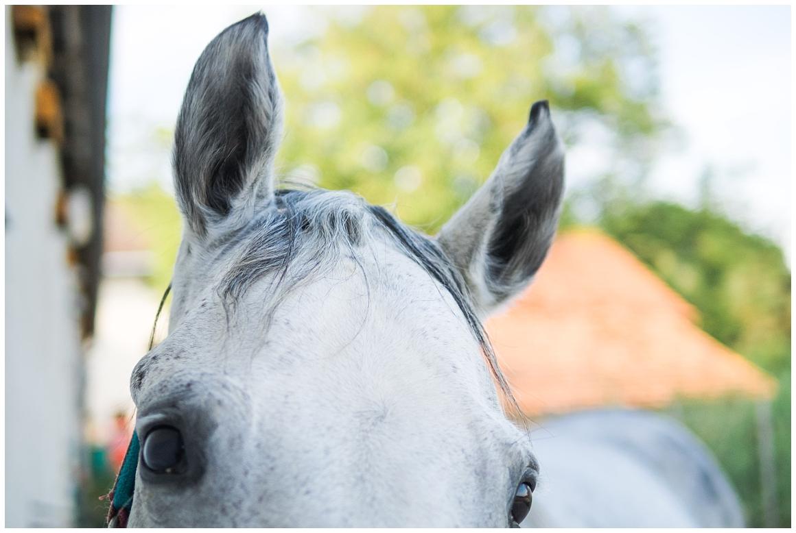 portraitfotos-mit-pferd-pferdefotograf-münchen-rosenheim-natürliche-fotos-katrin-kind-photography_0031.jpg
