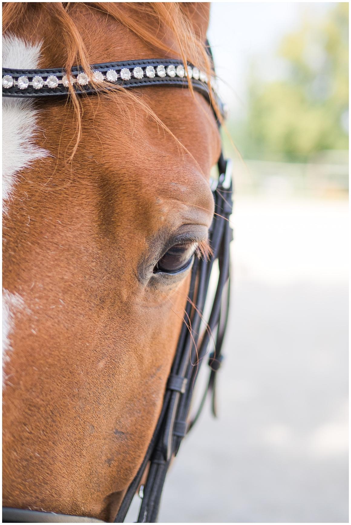 portraitfotos-mit-pferd-pferdefotograf-münchen-rosenheim-natürliche-fotos-katrin-kind-photography_0002.jpg