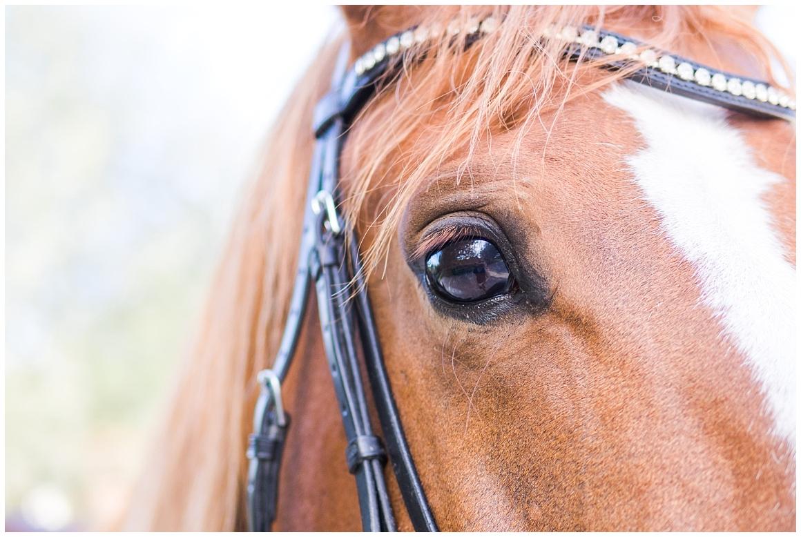 portraitfotos-mit-pferd-pferdefotograf-münchen-rosenheim-natürliche-fotos-katrin-kind-photography_0005.jpg