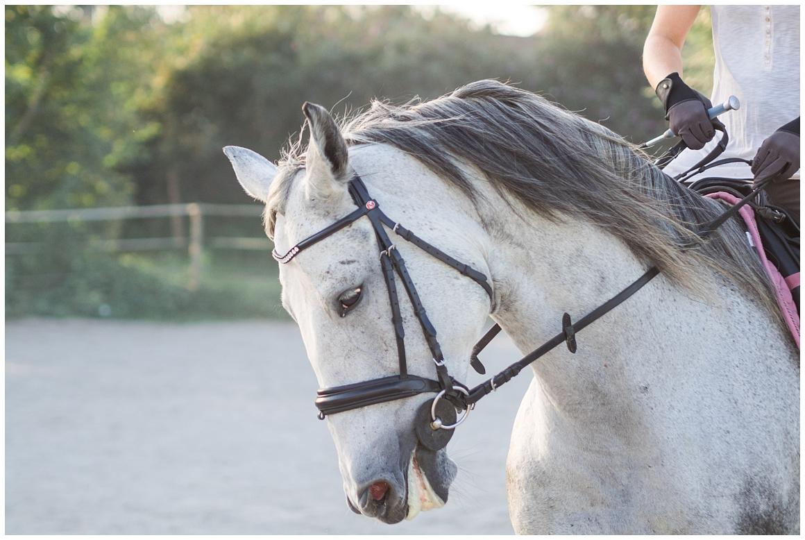 portraitfotos-mit-pferd-pferdefotograf-münchen-rosenheim-natürliche-fotos-katrin-kind-photography_0041.jpg