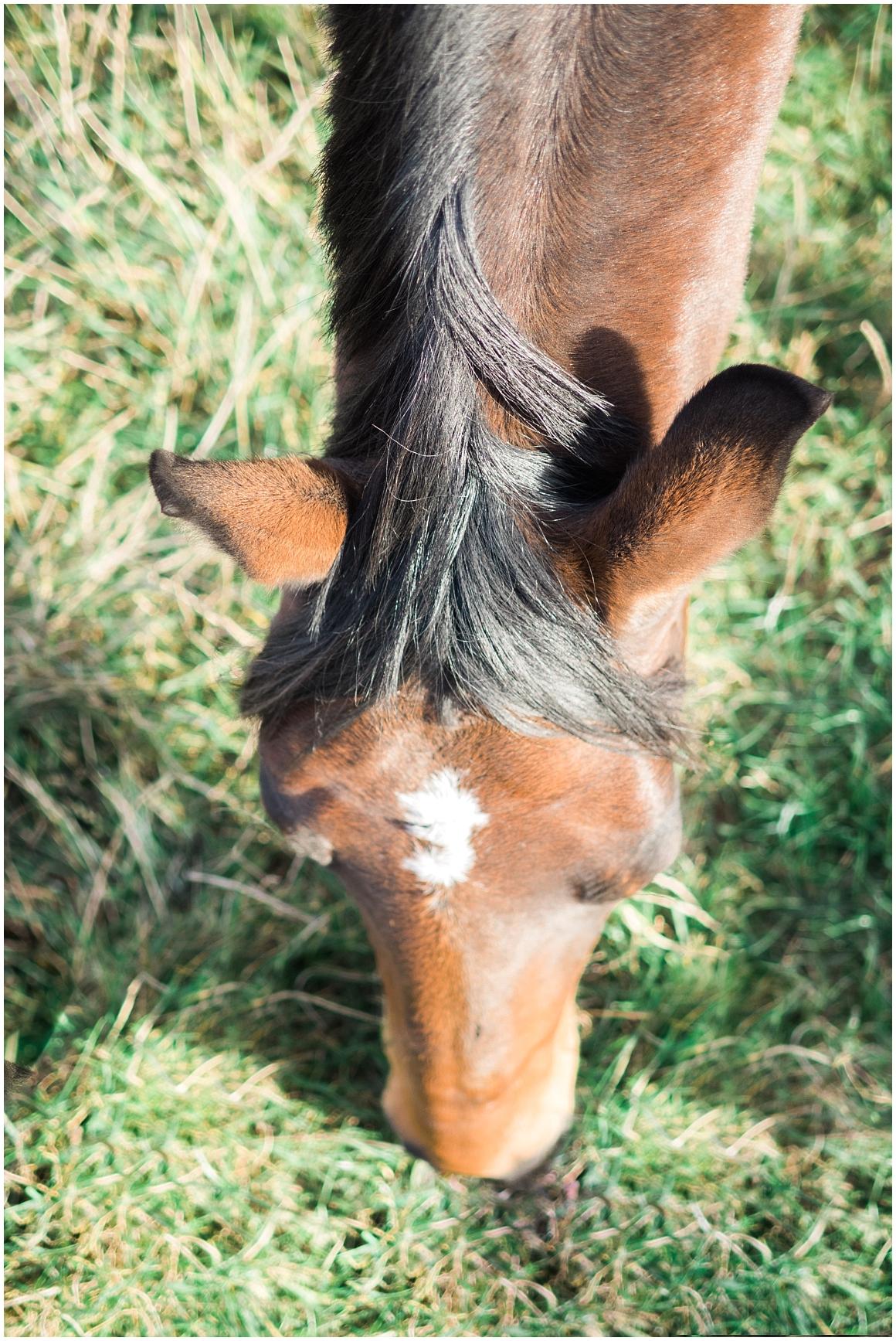 pferdefotograf-pferdeportrait-fotoshooting-mit-pferd-münchen-rosenheim-by-katrin-kind-photography_0023.jpg