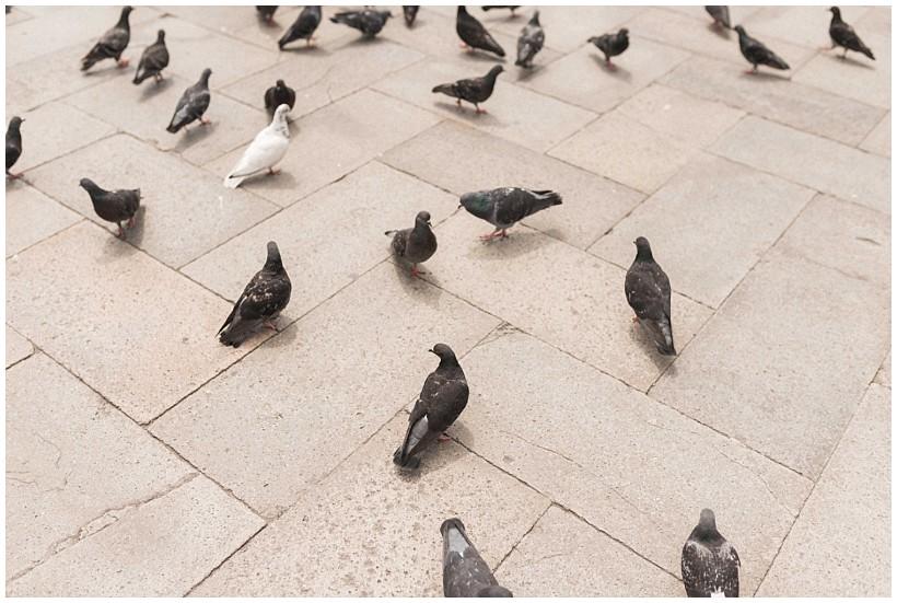 venedig-venice-städtereise-ausflug-trip-katrin-kind-photography_0031.jpg